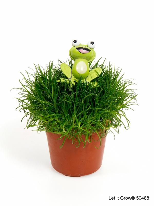 Sagina 5,5 cm Frog