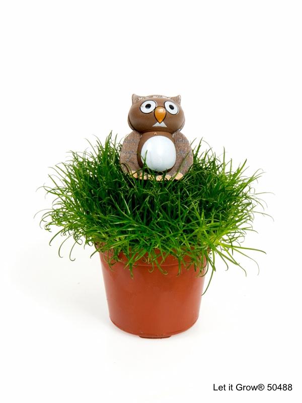 Sagina 5,5 cm Owl