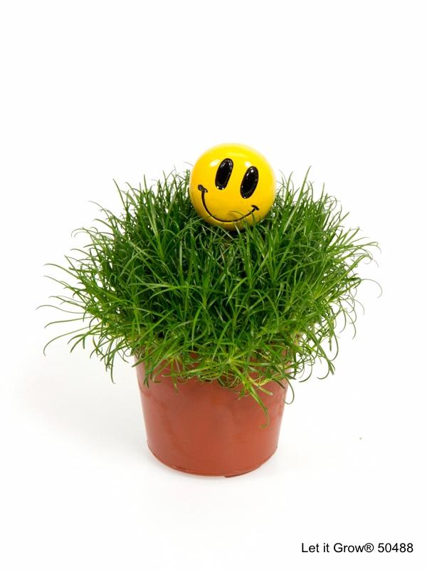 Sagina 5,5 cm Stick Smiley