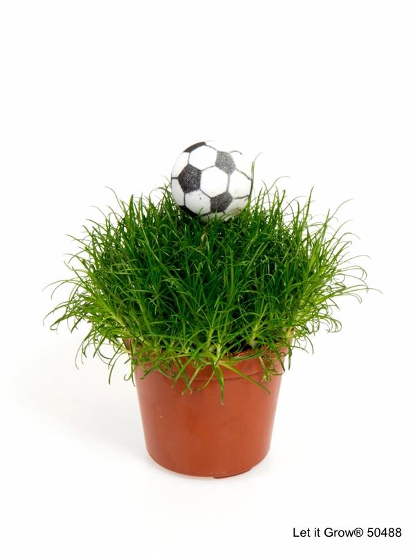 Sagina 5,5 cm Football