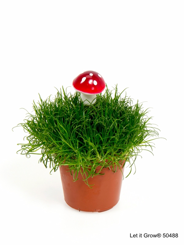 Sagina 5,5 cm Mushroom
