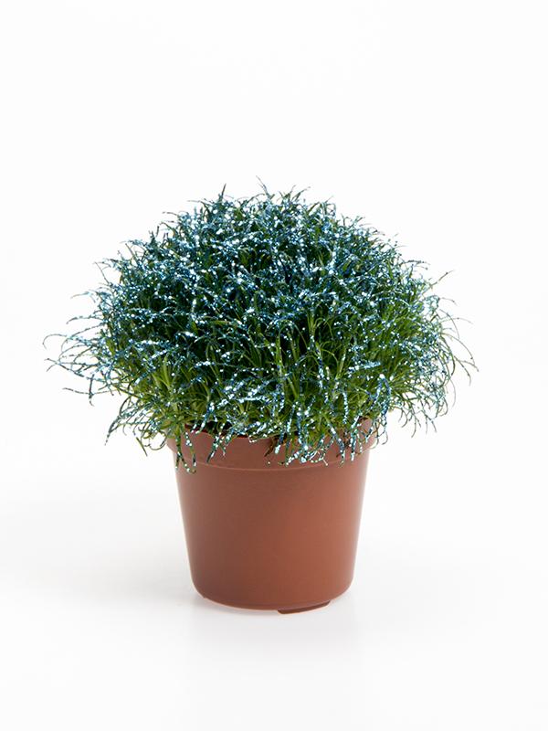 Colorina - Blue