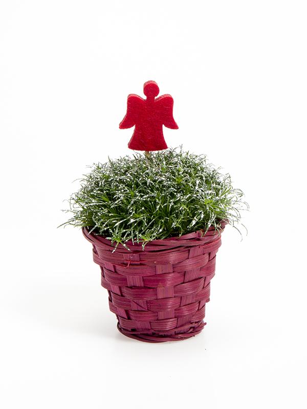 Rød kurv m/5,5 cm Sagina  Glimmer og filtengel