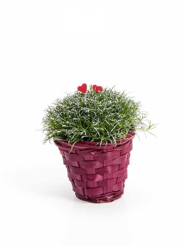 Rød kurv m/5,5 cm Sagina  Glimmer og hjerter