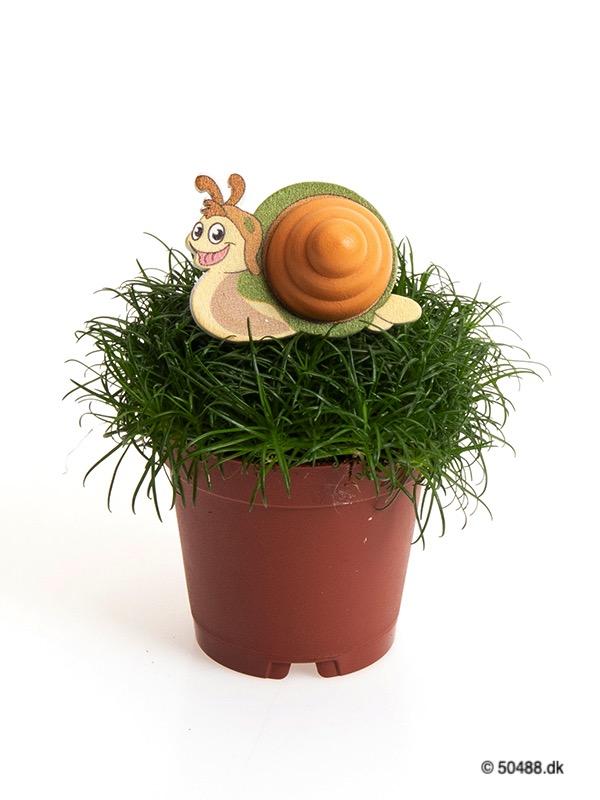 Sagina 5,5 cm Snail