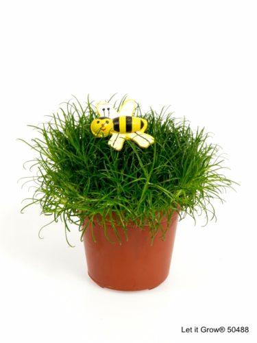 Sagina 5,5 cm Bee