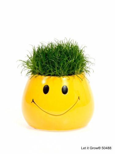 Sagina 5,5 cm Smiley pot
