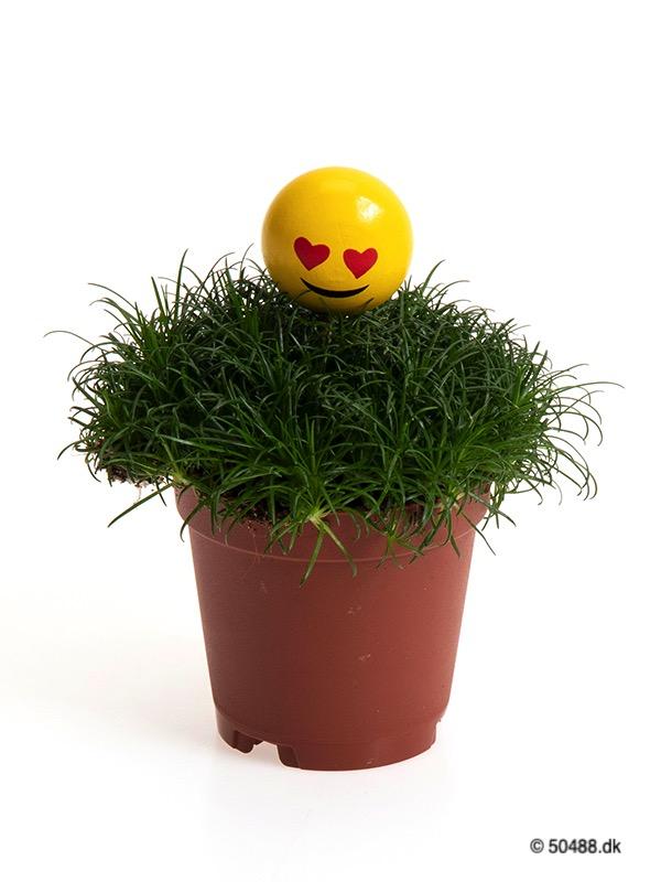 Sagina 5,5 cm Emoji