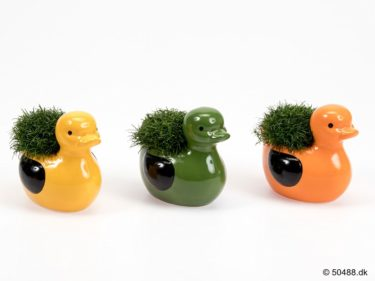 Sagina in Ceramic Duck